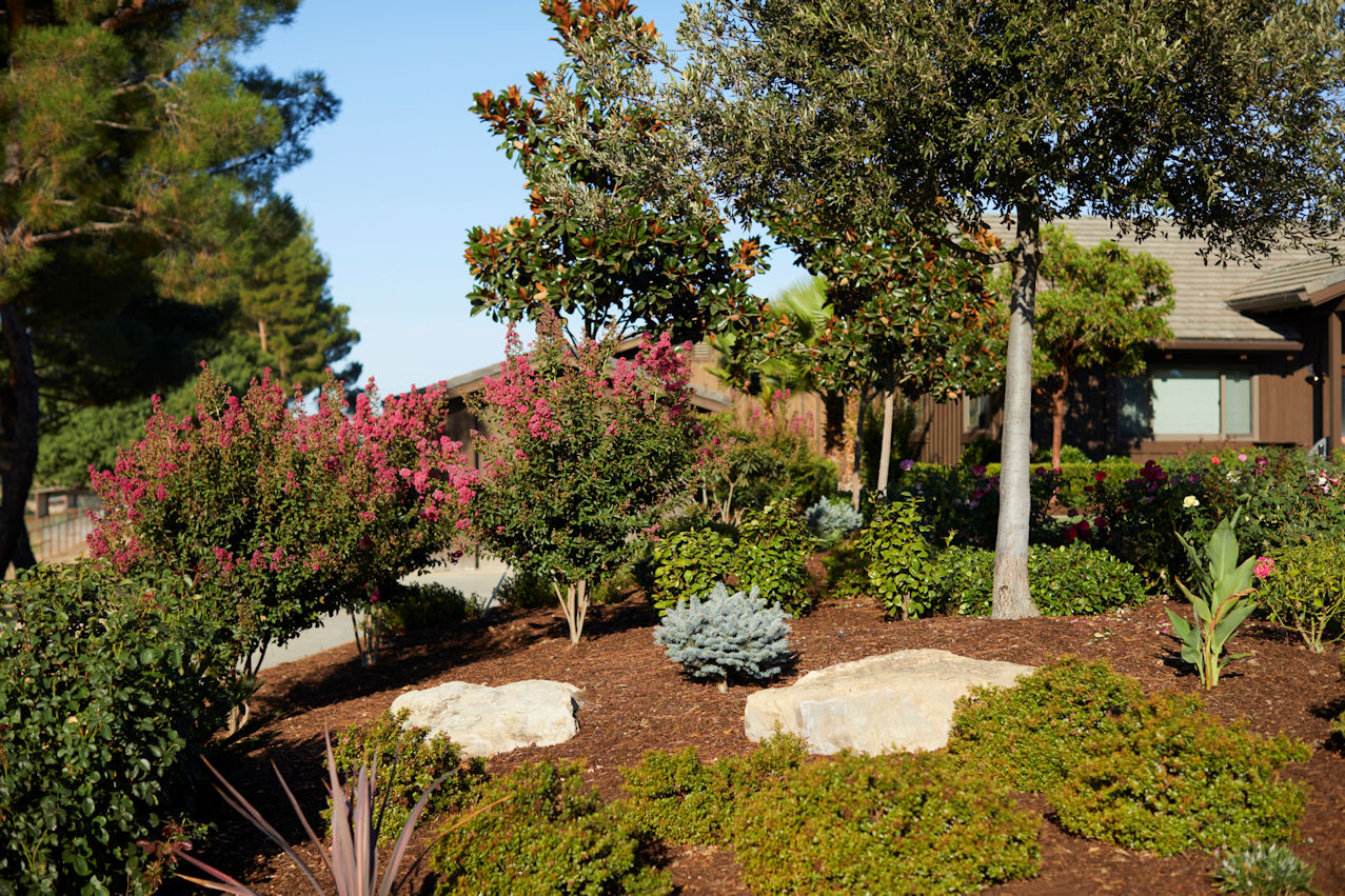 climate-appropriate accent plantings in Coastal Retreat Project by Tim Johnson at LIVIT